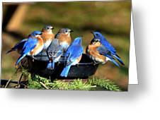 Bluebird Watering Hole Greeting Card
