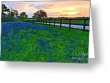 Bluebonnet Fields Forever Brenham Texas Greeting Card