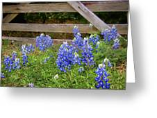 Bluebonnet Gate Greeting Card