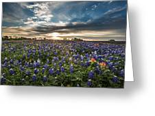 Bluebonnet Heaven Greeting Card
