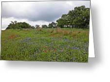 Bluebonnet Hill Greeting Card