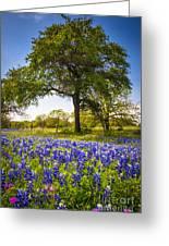 Bluebonnet Meadow Greeting Card
