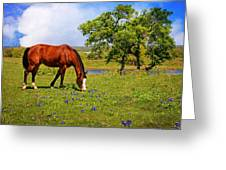 Bluebonnet Trail Delight Greeting Card