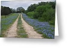 Bluebonnet Trail Greeting Card