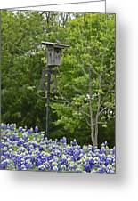 Bluebonnets And Bluebird Greeting Card