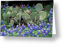 Bluebonnets And Cacti Greeting Card
