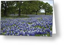 Bluebonnets And Oaks Greeting Card