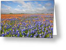 Bluebonnets And Paintbrush Near Whitehall Texas 2 Greeting Card