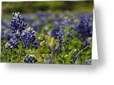 Bluebonnets In Spring Greeting Card