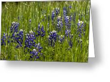 Bluebonnets In The Grass Greeting Card