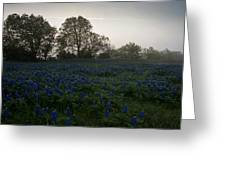 Bluebonnets On A Hazy Morning Greeting Card
