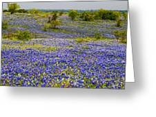 Bluebonnets Over Hill And Dale Greeting Card