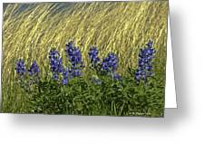 Bluebonnets With Ladybug Greeting Card