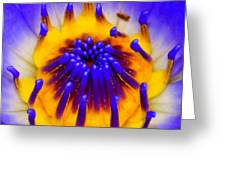 Blue Brilliance Greeting Card