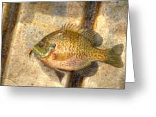Bluegill In Hdr Greeting Card