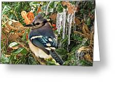 Bluejay And Ice Greeting Card
