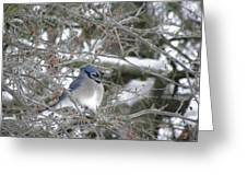 Bluejay In Crabtree Greeting Card