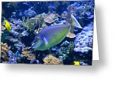 Bluespine Unicornfish Greeting Card by Karon Melillo DeVega