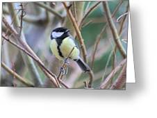 Bluetit Greeting Card