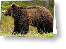 Bluetooth Grizzly 2 Greeting Card
