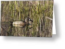 Bluewing Teal Greeting Card