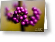Blur Berries Greeting Card