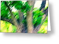 Blurred Pecan Greeting Card
