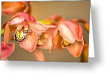 Blush Orchid Greeting Card