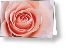 Blush Rose Greeting Card