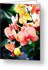 Blushing Beauty Greeting Card