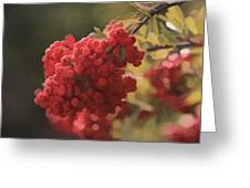 Blushing Berries Greeting Card by Kandy Hurley