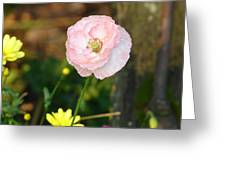 Blushing In Pink Greeting Card