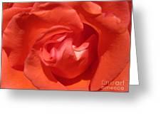 Blushing Orange Rose 5 Greeting Card