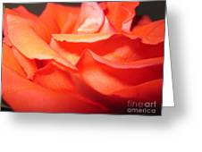 Blushing Orange Rose 6 Greeting Card