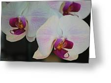 Blushing Orchids Greeting Card