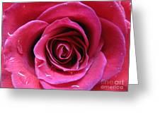 Blushing Pink Rose 3 Greeting Card