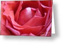 Blushing Pink Rose Greeting Card