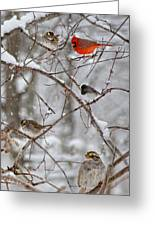 Blushing Red Cardinal In The Snow Greeting Card