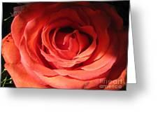Blushing Orange Rose 3 Greeting Card