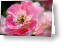 Blushing Spring Tulip Greeting Card