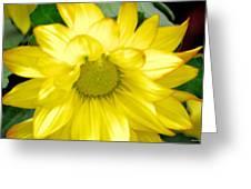 Blushing Sunshine Greeting Card