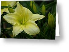Blushing Yellow - Lilies Greeting Card