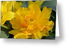 Blushing Yellow Greeting Card