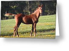 Blythewood Farms Horse Greeting Card