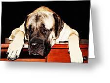 Mastiff Art By Sharon Cummings Greeting Card