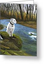 Bo At The Patapsco Greeting Card