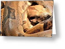 Boa Constrictor Greeting Card
