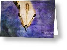 Boa Snake Greeting Card