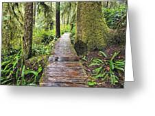 Boardwalk On The Rainforest Trail In Greeting Card