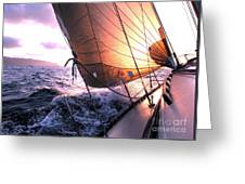Boats Wing  Greeting Card